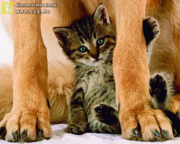 Cicavédelem - kutyásan