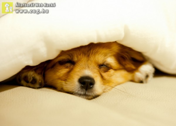 Csöpi kutya alszik!