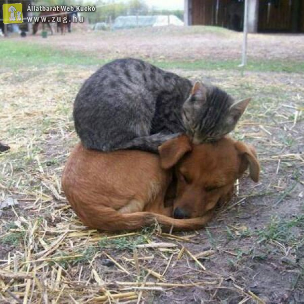 Egymáson pihenés a legjobb!
