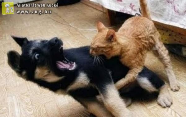 Esti kutya - cica hancúr
