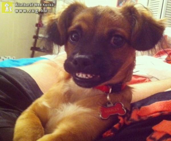 Kérek egy mosolyt!