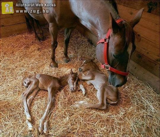 Kiscsikók születtek