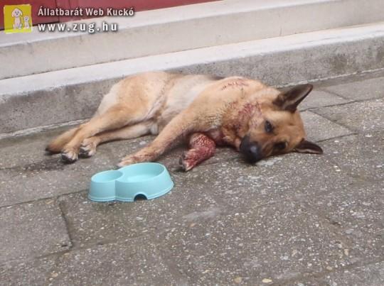 Kutya támadt kutyára