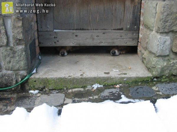 Kutyák bezárva
