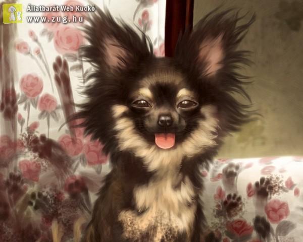Kutyakozmetika után