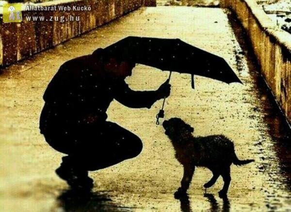 Kutyamentés - állatszeretet