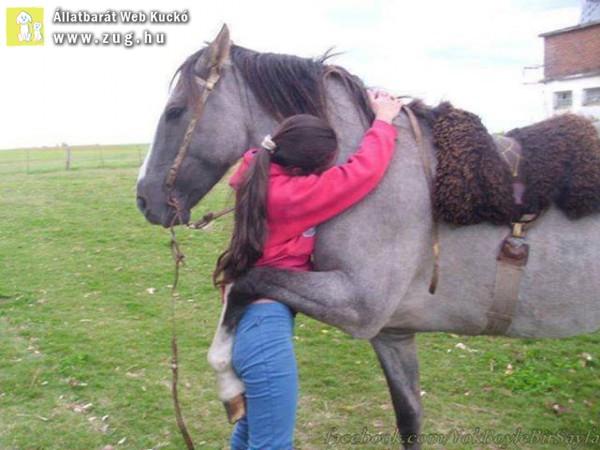 Ló ölelés