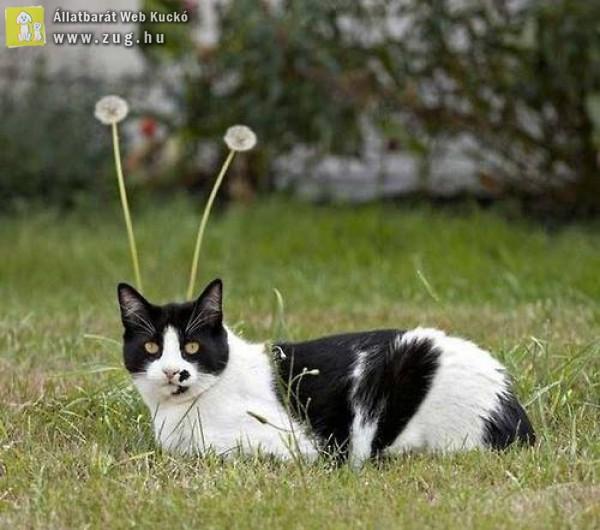 Macska-csiga-biga
