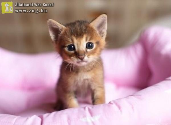 Mentett kiscica
