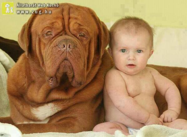 Mint két tojás - kutya és baba