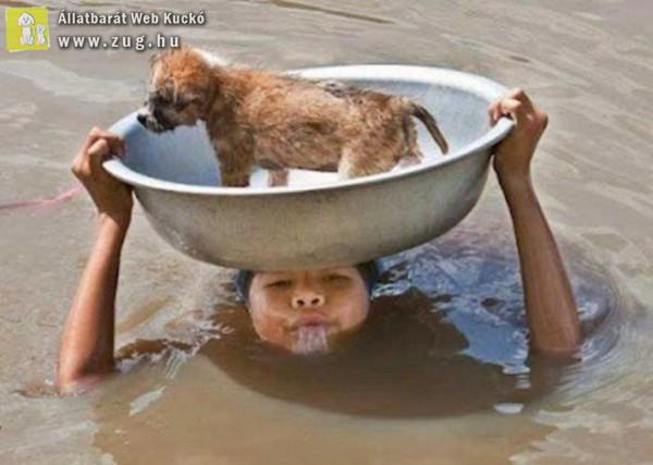 Önzetlen állatmentés - mindennapi hősök