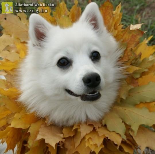 Őszi kutyanyaklánc divat