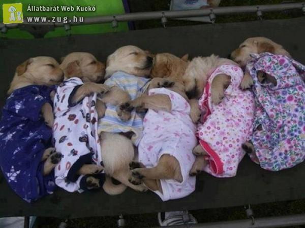 Pizsama Variációk