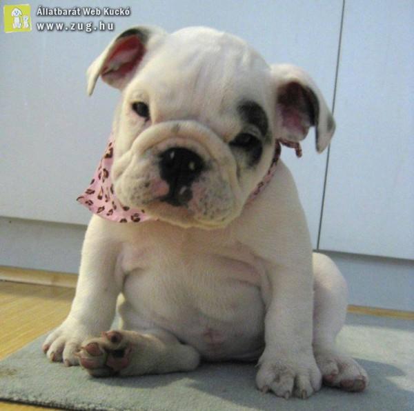 Pufi kutya :D