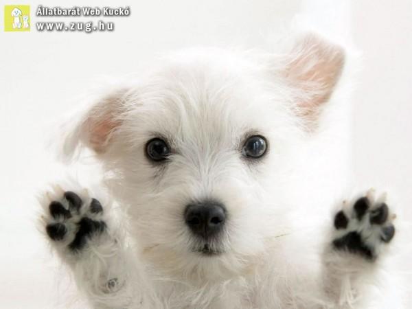 Tappancs kutya