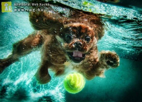 Víz alatt a labdás kutya :)