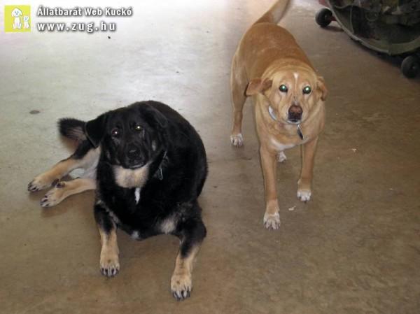 kutyapáros - kutyatestvérek