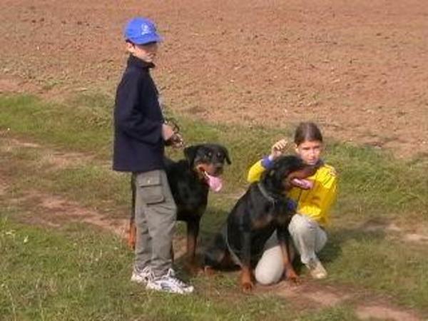 Rottweilerek és a kisgazdik