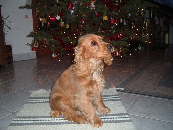 Sophie a fa alatt