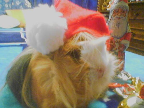 Malac karácsony 2
