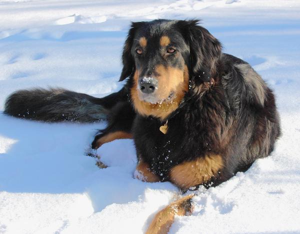 Tina a hóban