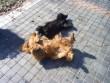 Süttetik a hasukat, szépen sütött a nap:)