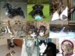 3 kutya és 3 macska a családban
