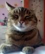 Az eltünt cica