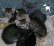 Mentett kiscicák