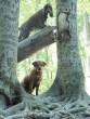 Kutyák az erdõben