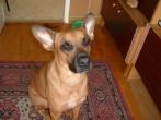 Az én édes kutyám:)