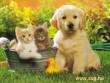 Cicák, kiskutyával