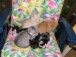 Kiscicák szeretõ gazdikat keresnek