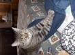 Grinnyke a doromboló macsek
