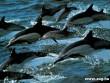 Delfinek vonulása