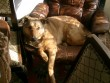 Argot a fotelében -elvben az enyém a fotel, de sose férek bele...