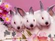 Kellemes húsvéti ünnepeket kívánok Mindenkinek:)