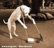 A jólnevelt kutya