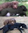 10 év elteltével is ugyanúgy szeretik egymást a kutyusok