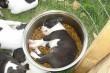 A kutyus, aki minél közelebb akar lenni az ételhez