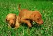 Apró kutyusok a fűben
