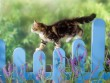 Cica a kerítésen