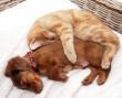 Ez aztán a kutya-cica barátság