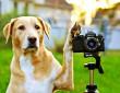 Fotós kutyus