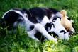 Kakukktojás a kutyusok közt