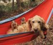 Kutyus és a prérikutyusok