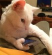 Okos cicának okos telefon