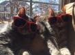 Sütkérezés a napon cica módra