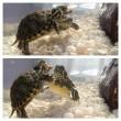 Teknősharc