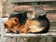 Kutyuson aludni a legjobb